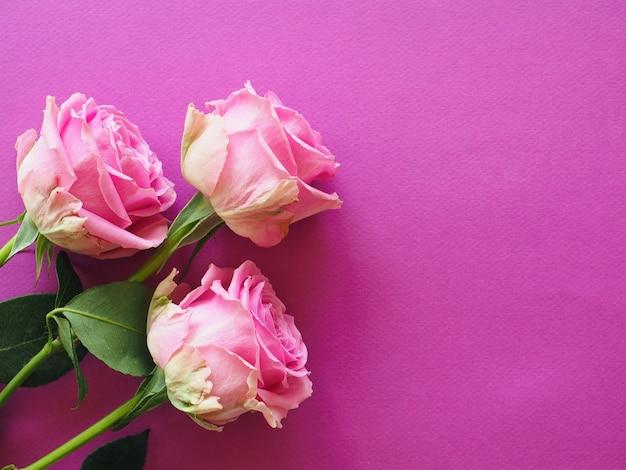 종이 바탕에 핑크 장미 꽃다발