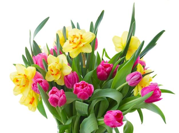 Букет из розовых тюльпанов и желтых нарциссов крупным планом на белом фоне