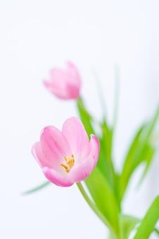 ピンクのチューリップの花の花束がクローズアップ