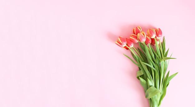 柔らかいパステル調の明るい背景にピンクのチューリップの花の花束。上面図。バレンタインデーのお祭りの背景。