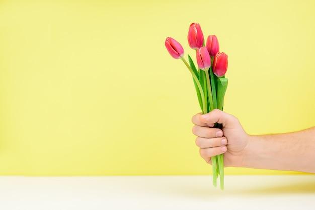 黄色の壁に男性の手でピンクのチューリップの花束。