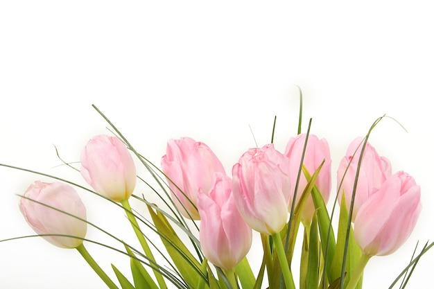 흰색 배경 위에 핑크 튤립 꽃다발
