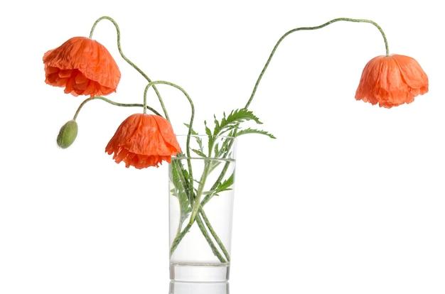 白い背景で隔離のガラスの花瓶のポピーの花束