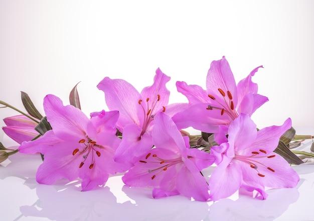 Букет из фиолетовых лилий на белом с отражением.
