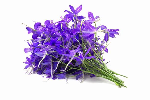 보라색 야생화의 꽃다발 반짝입니다.