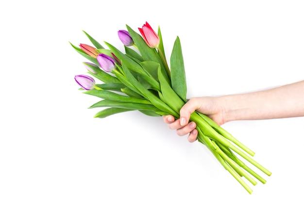 白い背景で隔離の女性の手で赤と紫のチューリップの花束