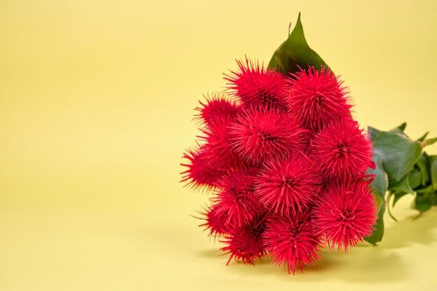 赤いヒマの木の花束。コピーする場所。