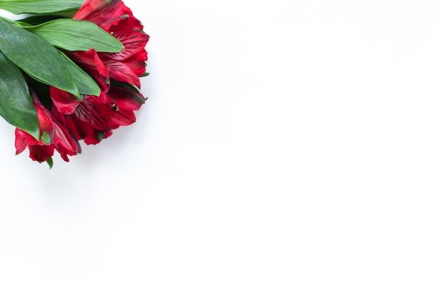 白い背景の赤い花アルストロメリアの花束