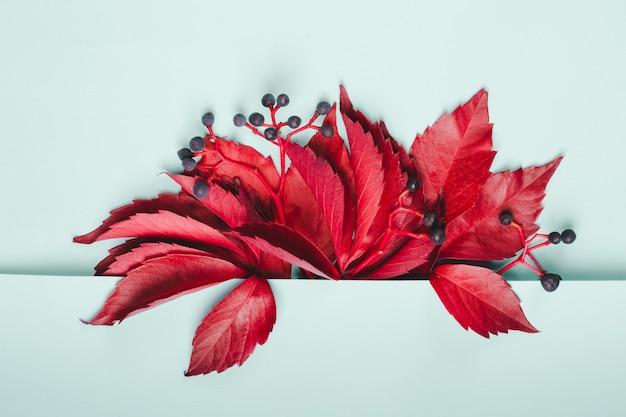 파스텔 블루 배경에 야생 포도의 붉은 잎과 푸른 열매의 꽃다발.
