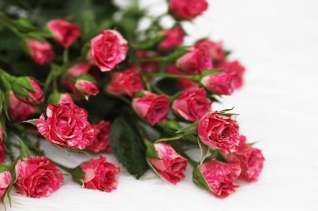 흰색 바탕에 빨간 장미 꽃다발