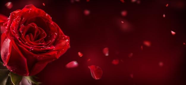 赤いバラの花束バレンタインデー結婚式の日の背景バレンタインと結婚式の境界線