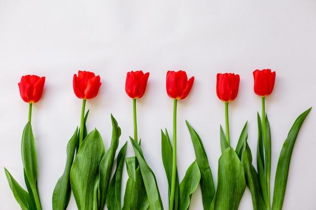 赤いチューリップ分離概念の花束3月8日