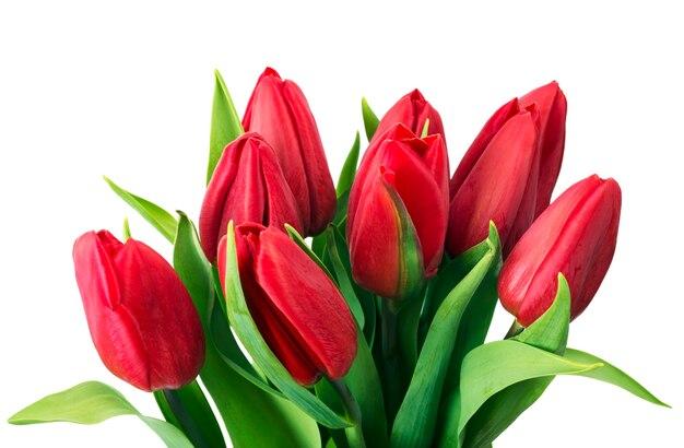 Букет красных тюльпанов.