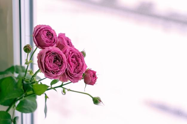 장미 꽃다발. 밝은 분홍색 새싹과 무성한 풍부한 녹색 단풍. 인테리어 아이템으로 아파트의 꽃. 자연광. 배경에 흰색 프레임이있는 창입니다.