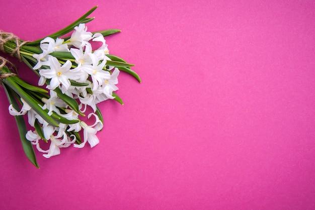 ピンクの表面に小さな白い春の花 チオノドクサの花束