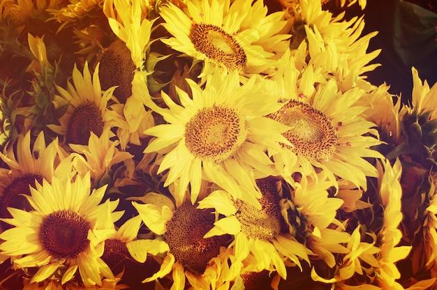 フィルターまたは効果とひまわりの花束のクローズアップ