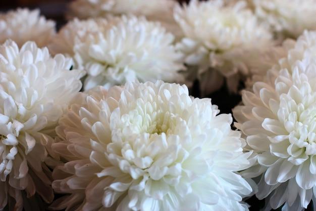 白い菊の花束。マクロ撮影