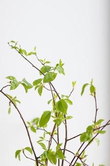 Букет из весенних ветвей, цветущий бутон в вазе с изолированной водой