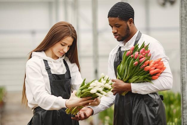 男のチューリップの花束。温室の男と女。エプロンの庭師。