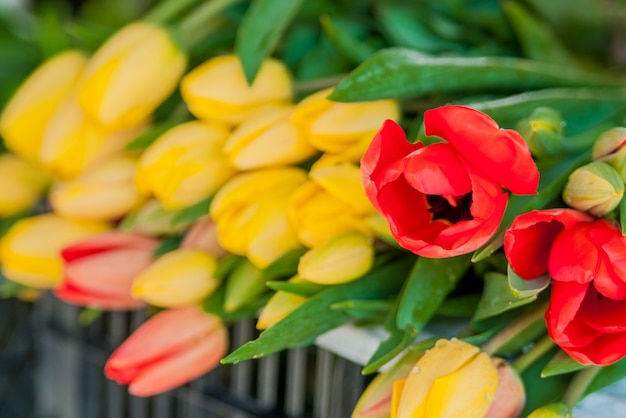 Букет тюльпанов перед весенней сценой. букеты из тюльпанов