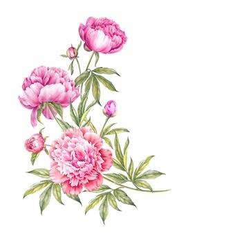 수채화 분홍색 모란의 꽃다발입니다.