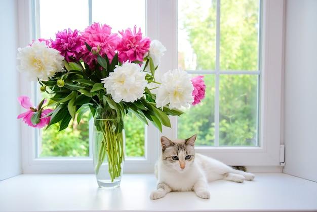 白とピンクの牡丹と窓辺の白猫の花束