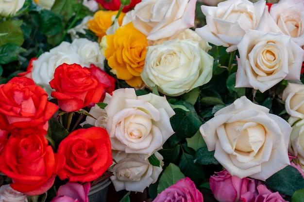 꽃 시장, 식물에있는 백색과 빨강 장미 꽃다발.