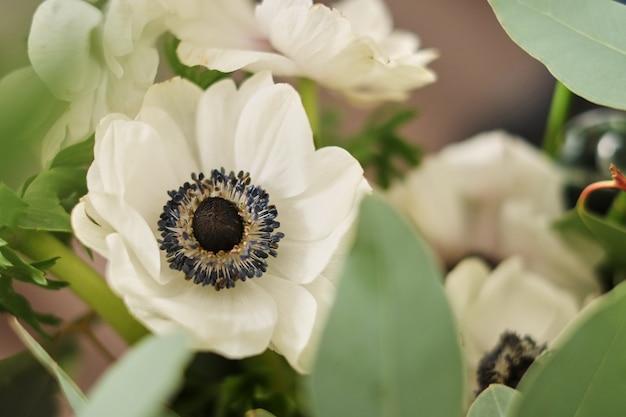 베이지 색 배경에 흰색 아 네모 네의 꽃다발입니다.