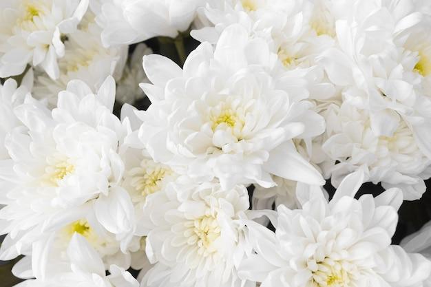 Букет из белых цветов хризантемы, вид сверху. крупным планом вид цветущих хризантем. цветочный фон. букет цветов с белыми лепестками. природа, концепция садоводства