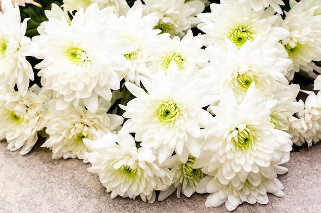 白い菊の花の花束