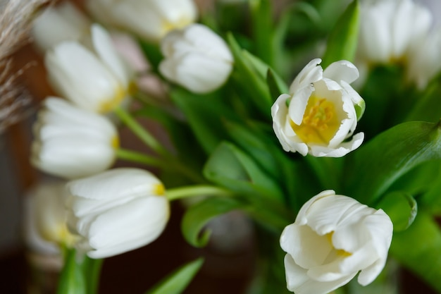 흰 튤립 꽃의 꽃다발을 닫습니다.