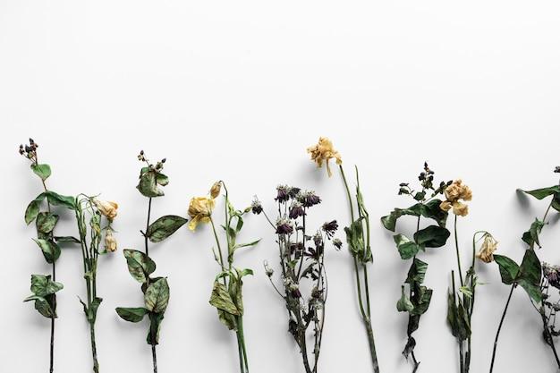 白い背景の上のしおれた花の花束