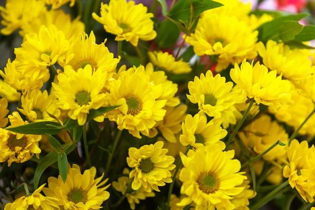 거리 시장에서 피는 노란 카모마일 꽃의 꽃다발,