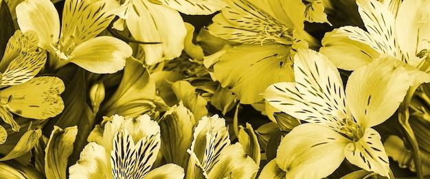 Букет из желтых орхидей красивый, свежий, стена ярких цветов. цветки крупные, сочные, ароматные.