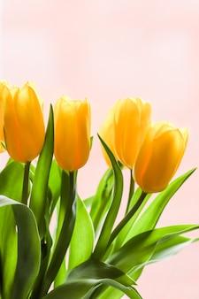 ピンクの背景に日光に照らされた黄色いチューリップの花束