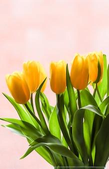 분홍색 배경에 햇빛이 비치는 노란 튤립 꽃다발