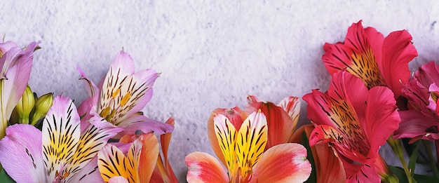 The bouquet of orchids is beautiful, fresh, bright red and lilac on a light background.