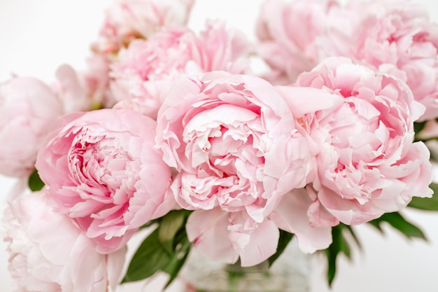 Bouquet of pale pink blooming peonies on the white isolated