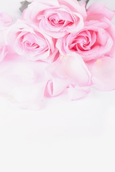 Bouquet of pale pink roses with petals on a light background