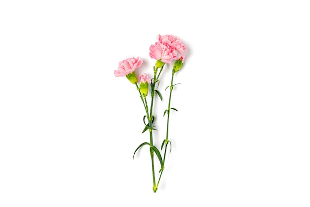 Bouquet of pink carnation flower isolated on white background