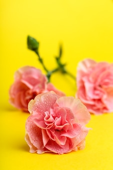 Bouquet of pink carnations flowers