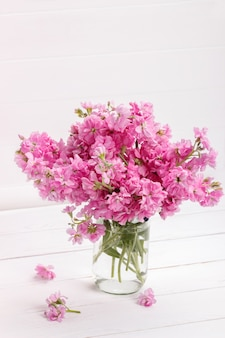 Bouquet of pink matthiola flowers