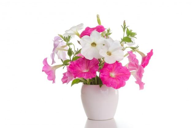 Bouquet of pink petunias
