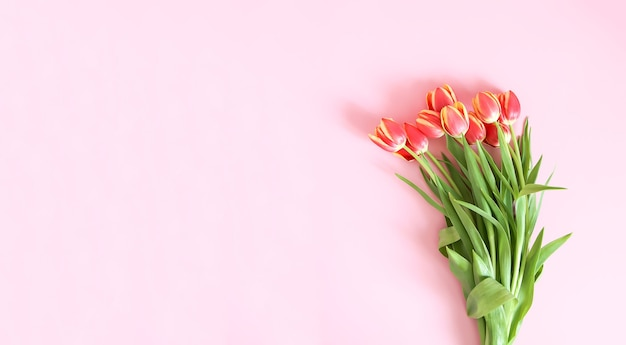 Bouquet of pink tulip flowers on soft pastel light background. top view. valentines day festive background.