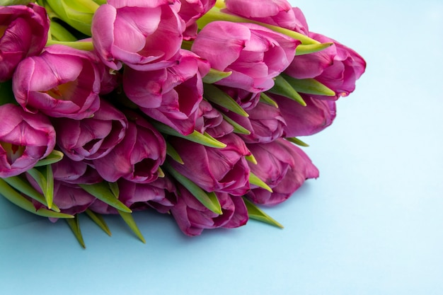 Bouquet of pink tulips/ easter day background. bouquet of tulips on a blue background, web banner