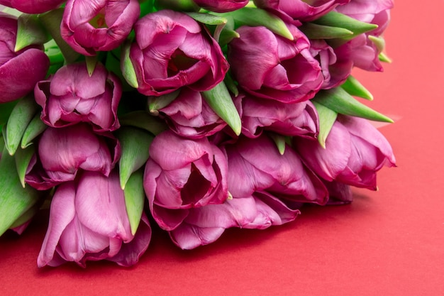 Bouquet of pink tulips/ easter day background. bouquet of tulips on a red background, web banner