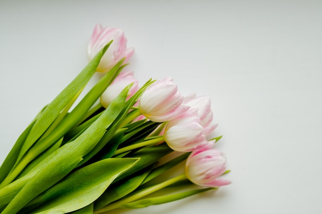 Bouquet of pink tulips isolated.
