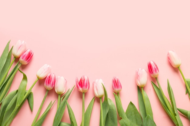 Bouquet of pink tulips on pink background with copy space.