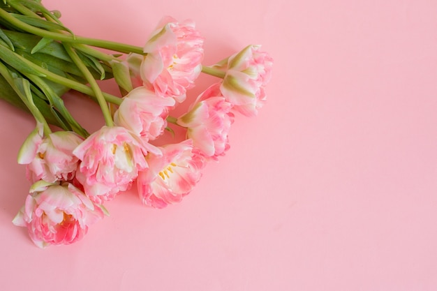 Bouquet of pink tulips on a pink background