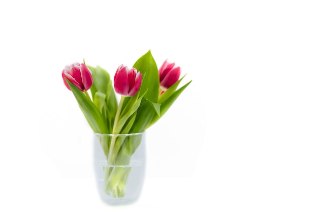 Bouquet of pink tulips in a transparent, glass vase on a white background, spring garden flower.